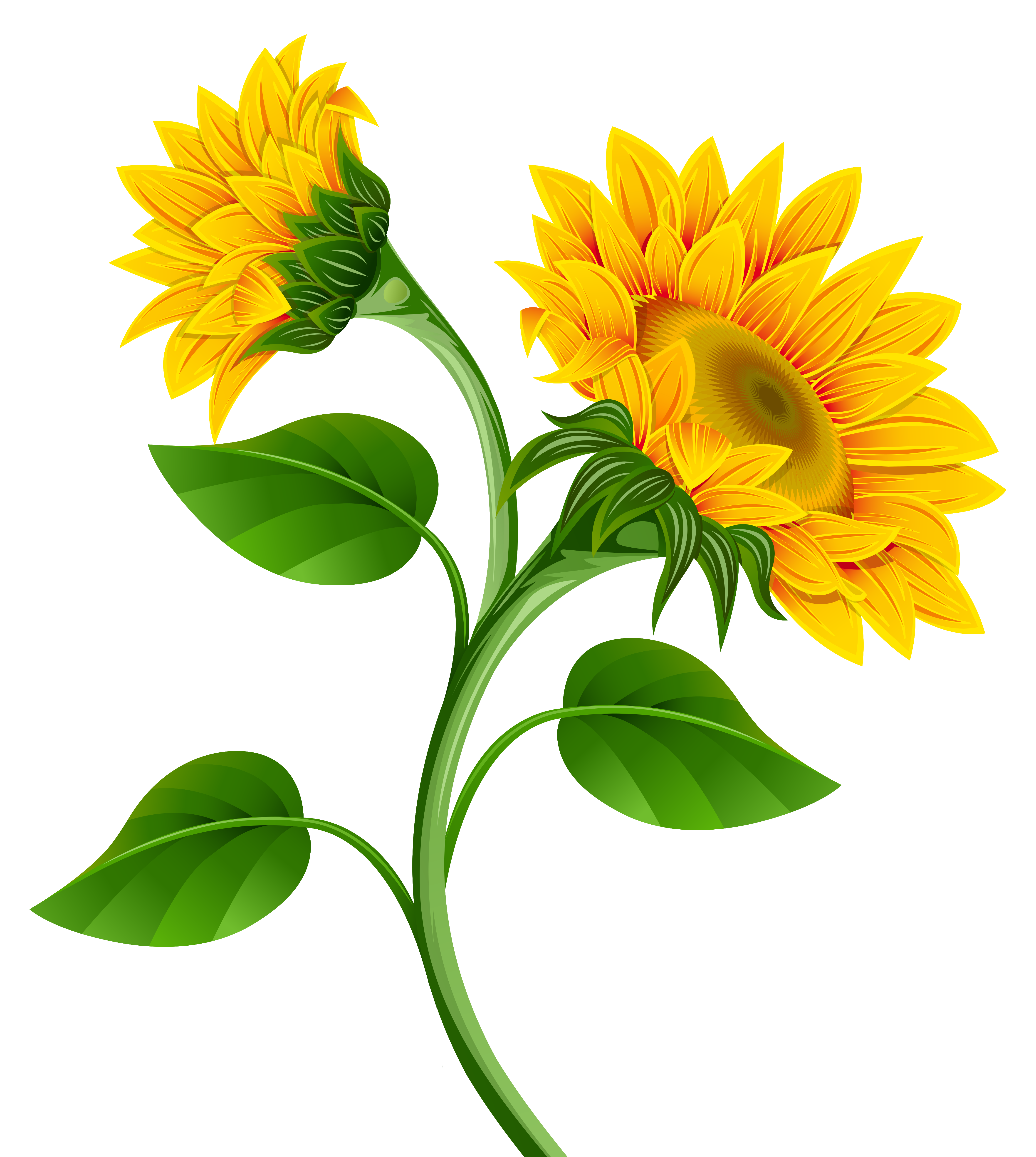 picture download Sunflowers clipart. Png image gallery yopriceville.