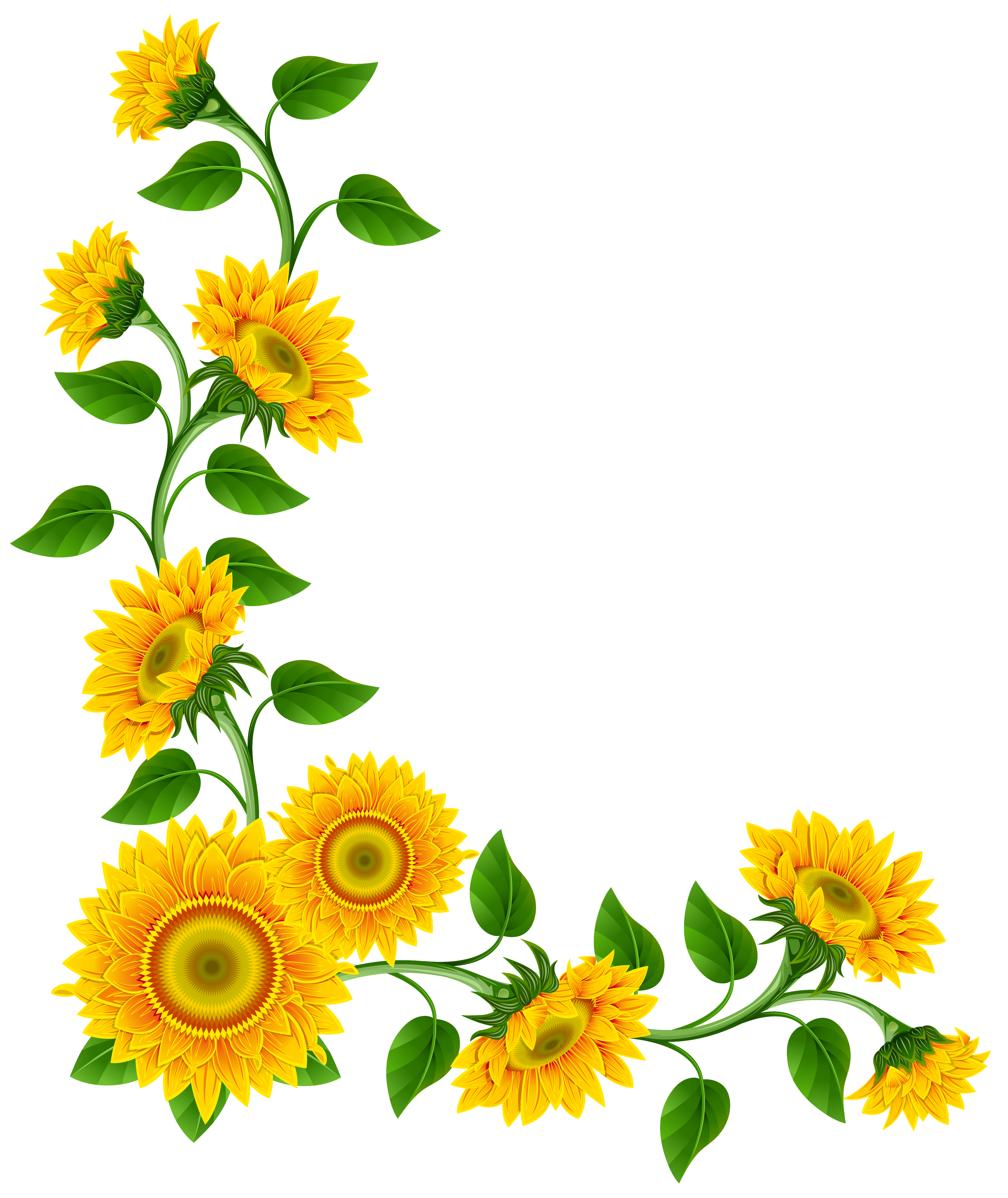 vector library download Sunflower Border Decoration PNG Clipart Image