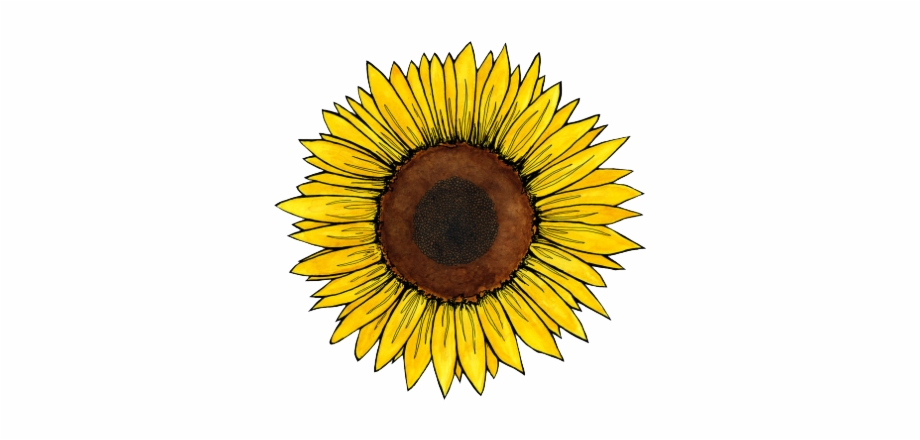 vector royalty free library Sunflowers clipart aesthetic. Download for free png.