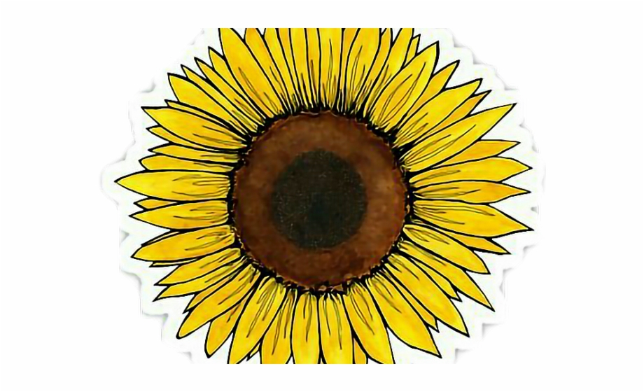 picture Sunflowers clipart aesthetic. Yellow flower tumblr transparent.