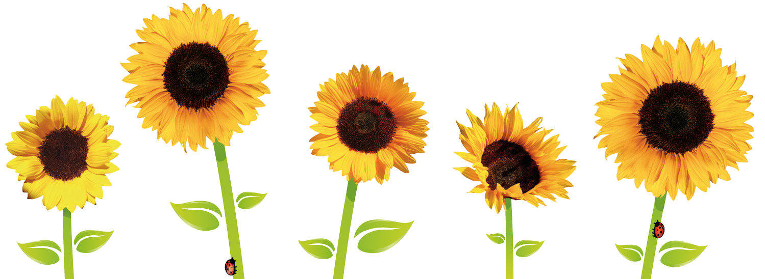 graphic download Sunflowers clipart aesthetic. Tumblr tumblraesthetic aesthetictumblr sunflo.