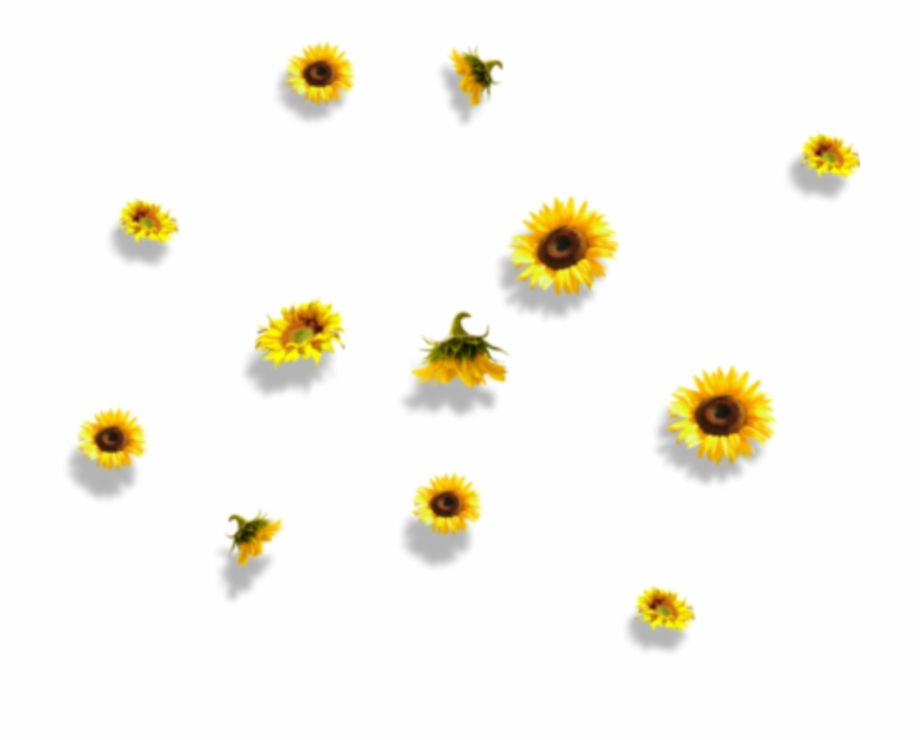 clip free Download for free png. Sunflowers clipart aesthetic.