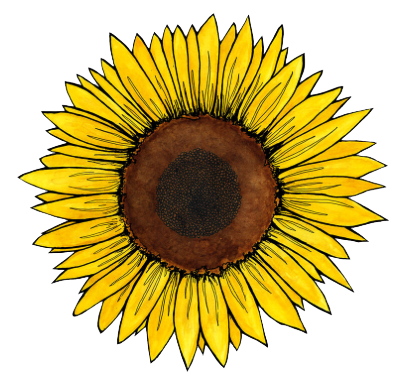 vector freeuse Flower sunflower freetoedit . Sunflowers clipart aesthetic.