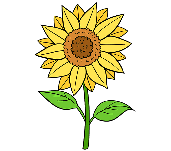 clip transparent stock Sunflowers clipart colorful. How to draw a.