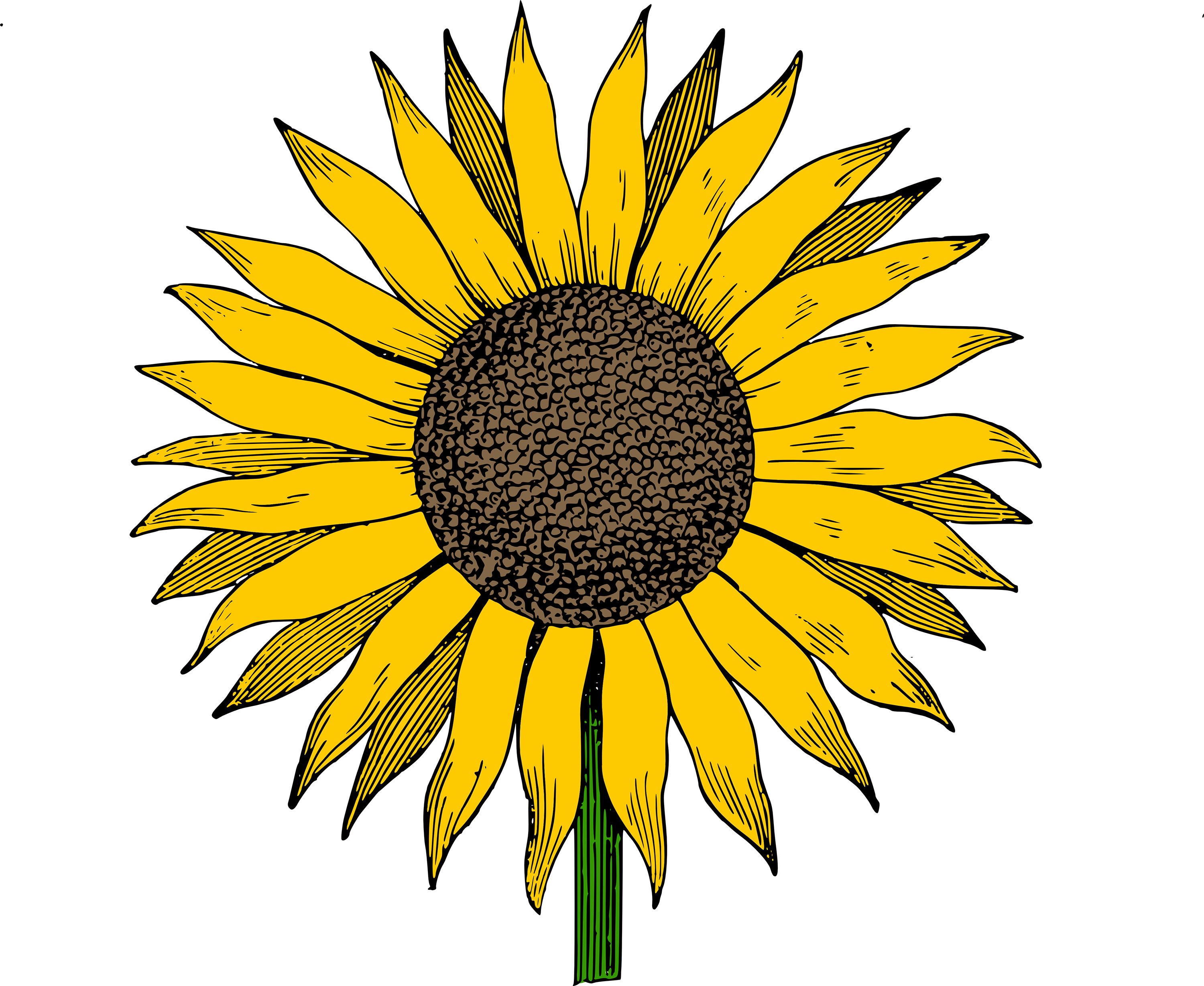 clip free library Sunflowers clipart colorful. Free clip art sunflower.