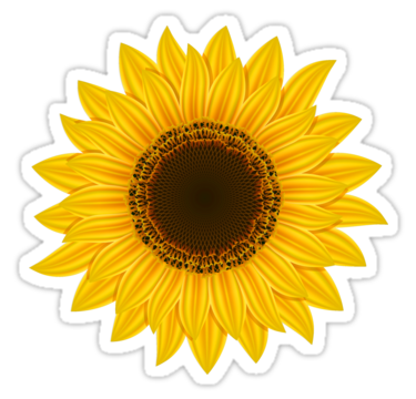 clip royalty free library Sunflower yellow cute flower. Sunflowers clipart colorful.