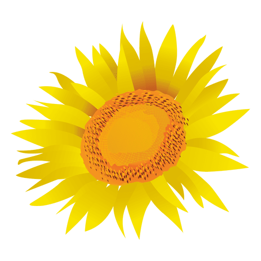graphic freeuse library Sunflower cartoon transparent png. Sunflowers clipart divider