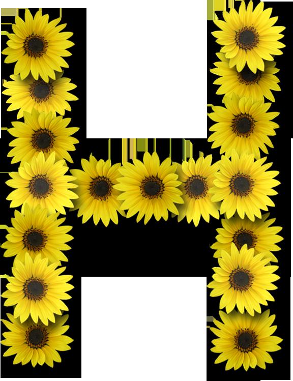 clip art royalty free stock Alfabeto h letter pinterest. Sunflowers clipart divider