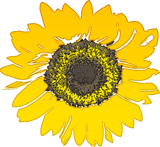 svg transparent stock Free sunflower flower clip. Sunflowers clipart public domain