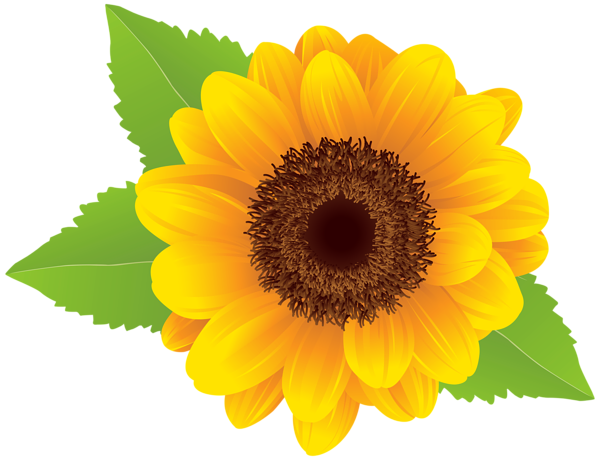 vector royalty free download Clipart sunflower. Png clip art image