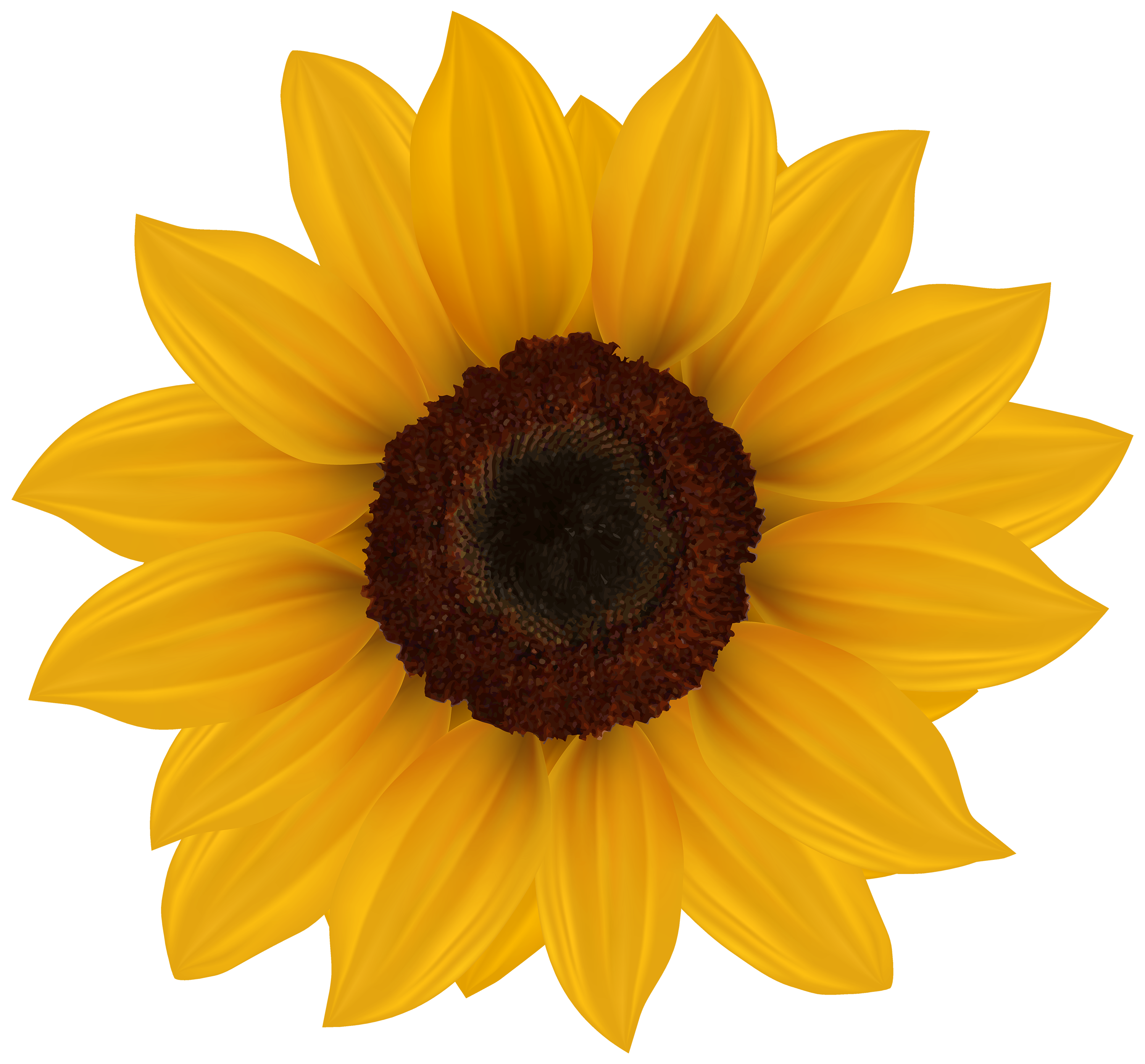 banner free library Sunflower PNG Clipart Image