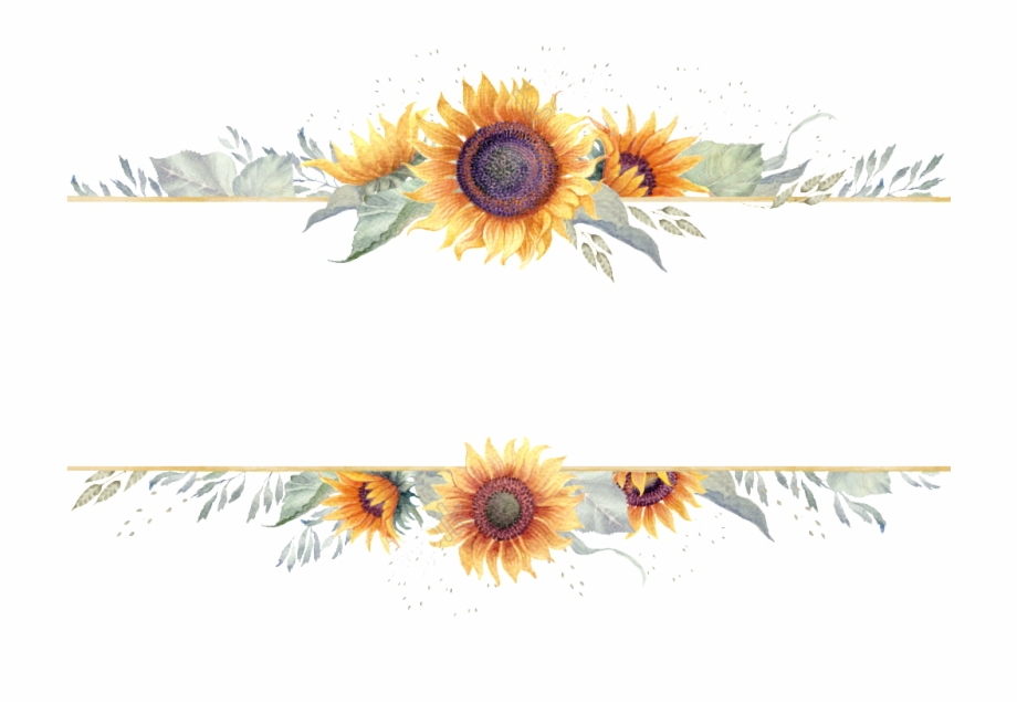 vector download Sunflowers clipart swag. Sunflower border png transparent.