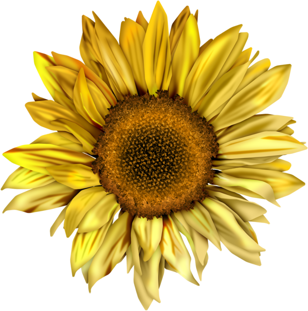 clipart royalty free Sunflowers clipart swag. Tumblr static l jhftdw.