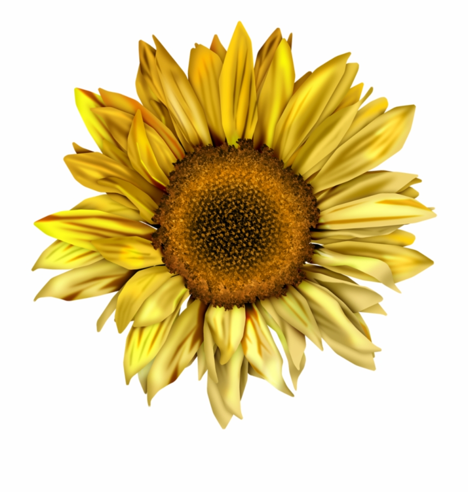 image transparent Royalty free sunflower png. Sunflowers clipart swag.