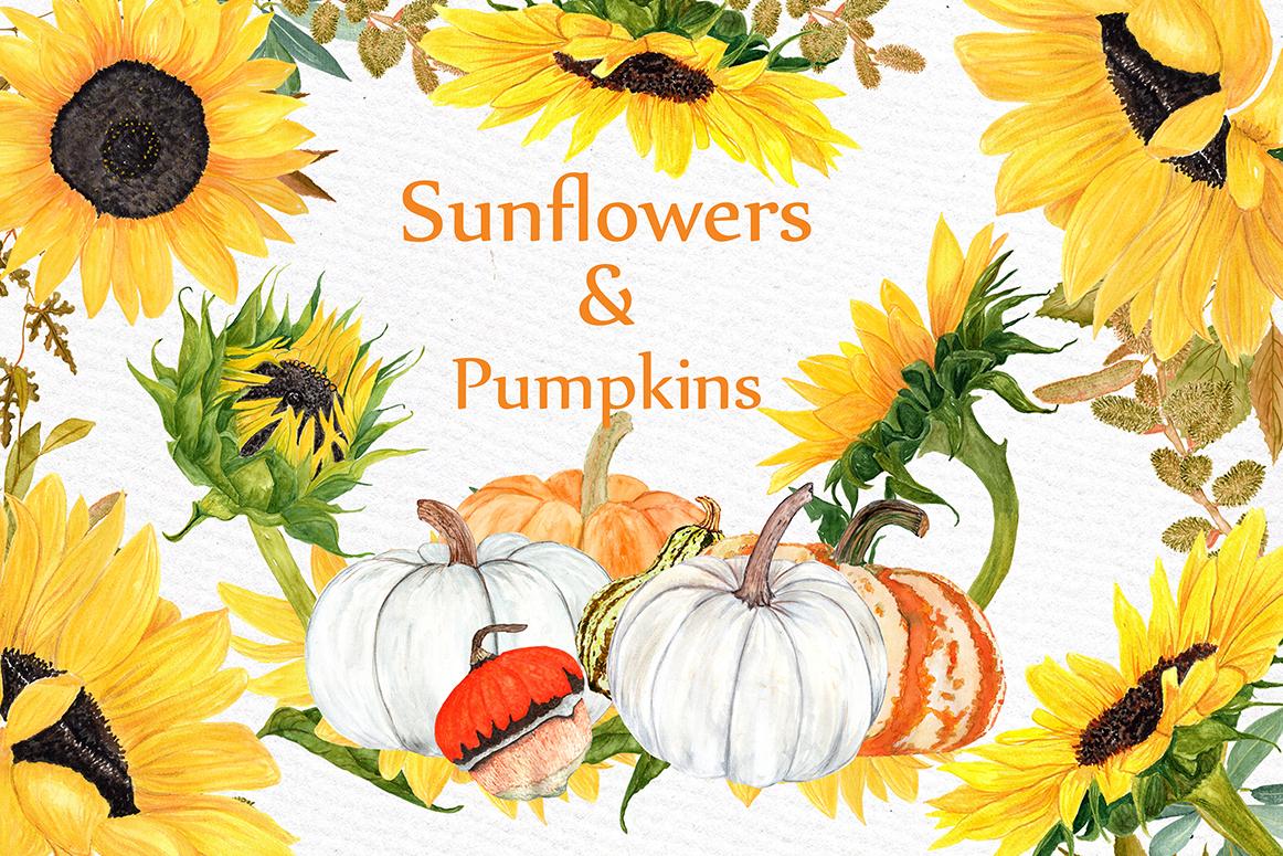clipart stock Watercolor sunflower pumpkin wedding. Sunflowers clipart thanksgiving