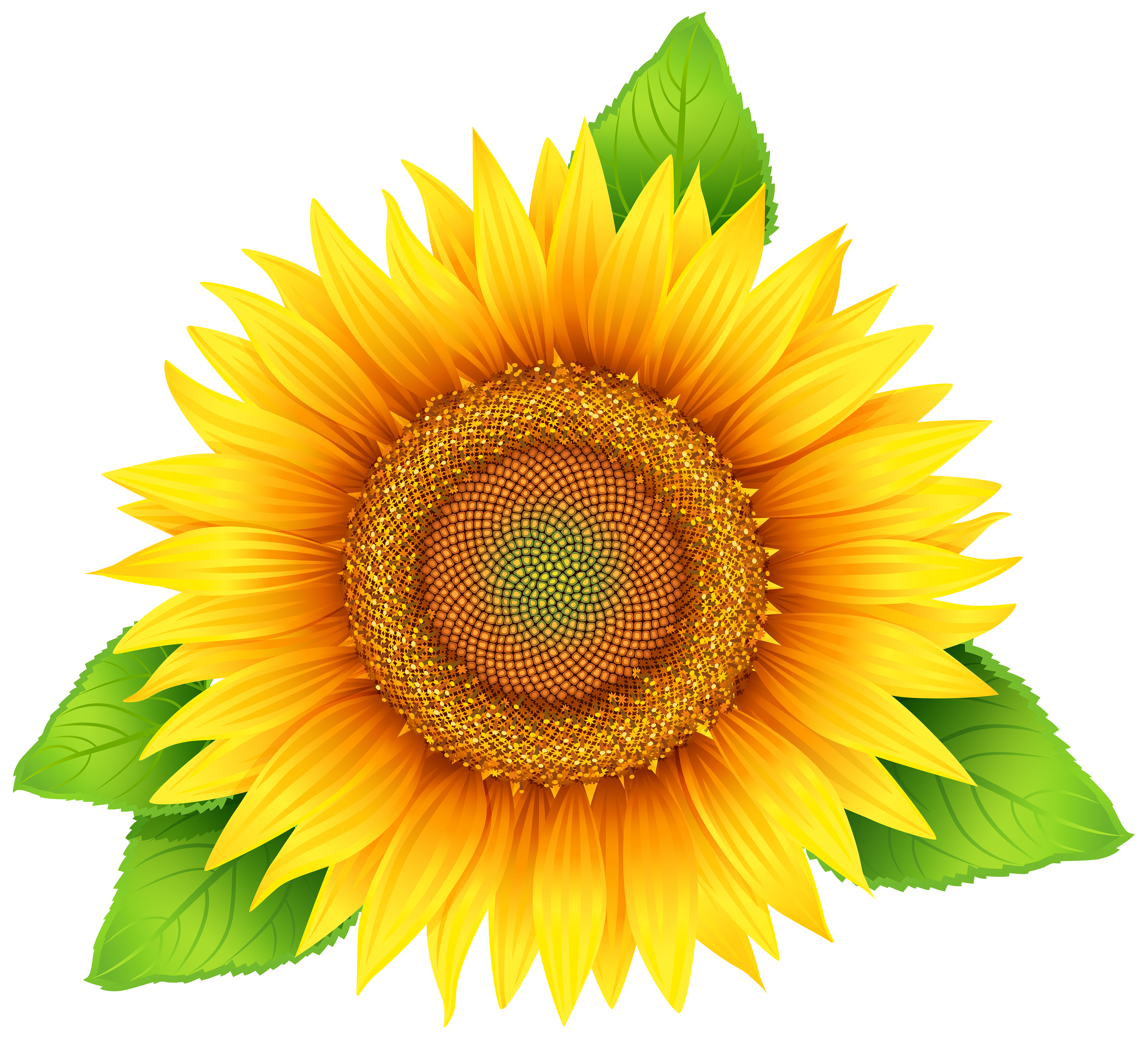 graphic free Sunflowers clipart transparent background. Sunflower png image gallery