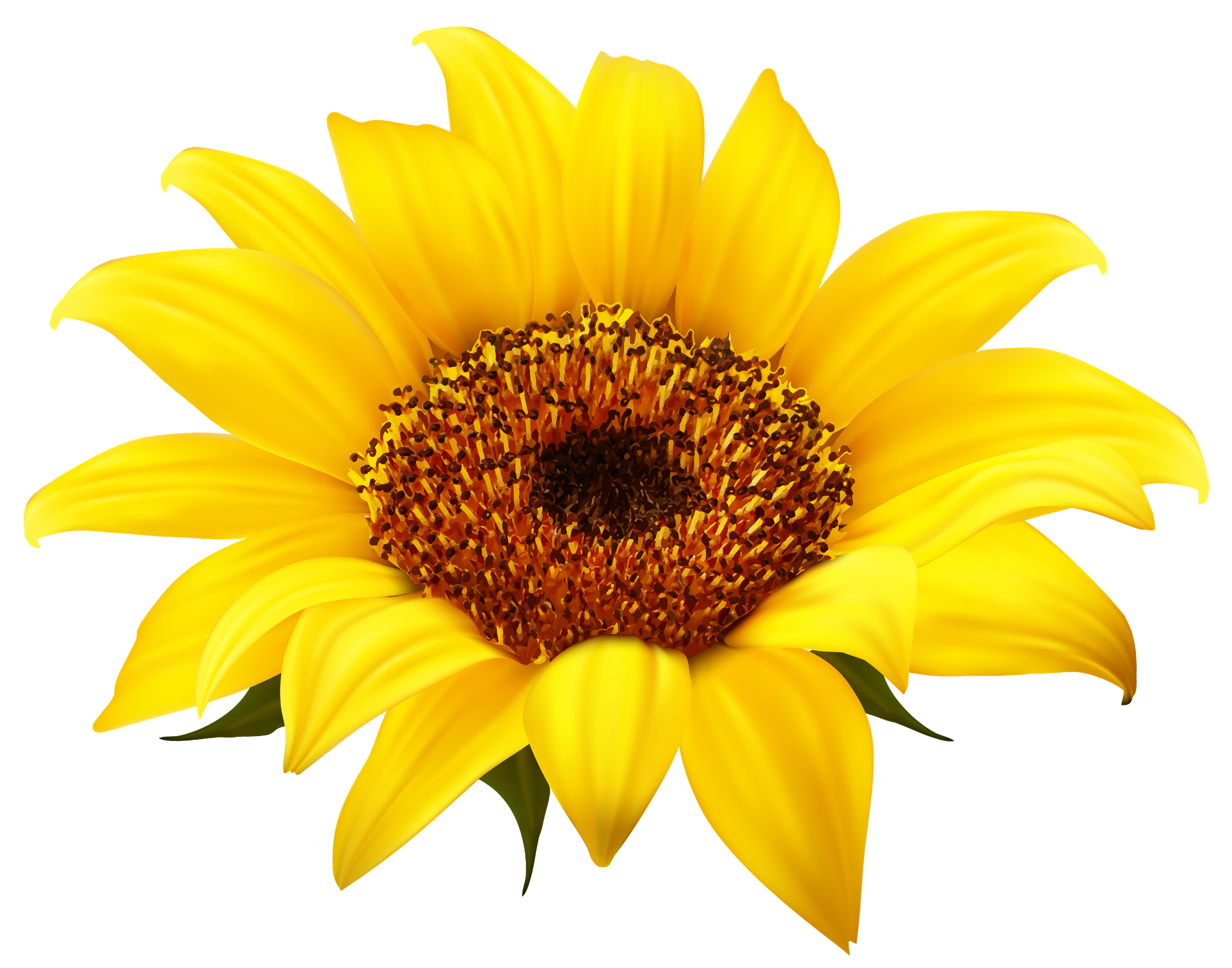 jpg freeuse library Sunflower png images free. Sunflowers clipart transparent background