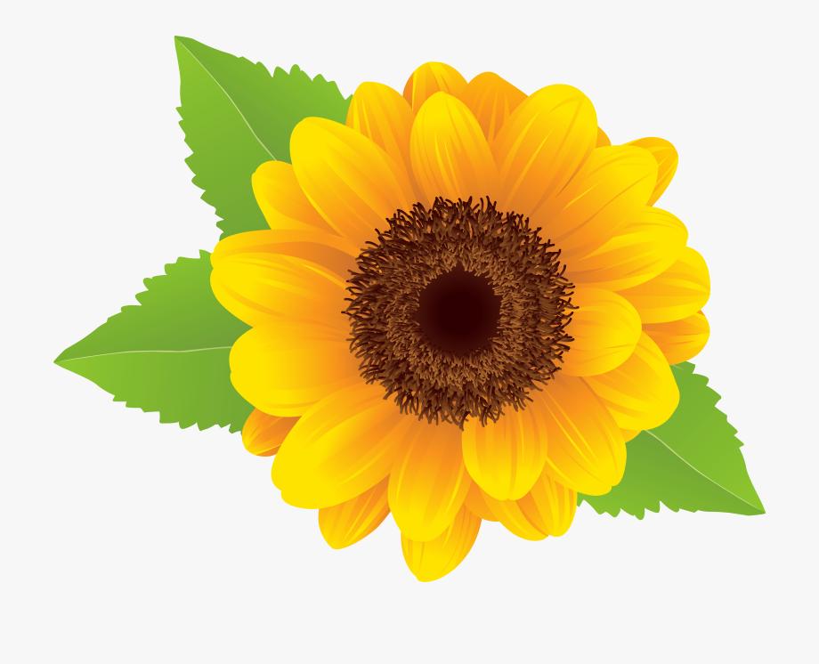 jpg free stock Sunflowers clipart transparent background. Sunflower flower