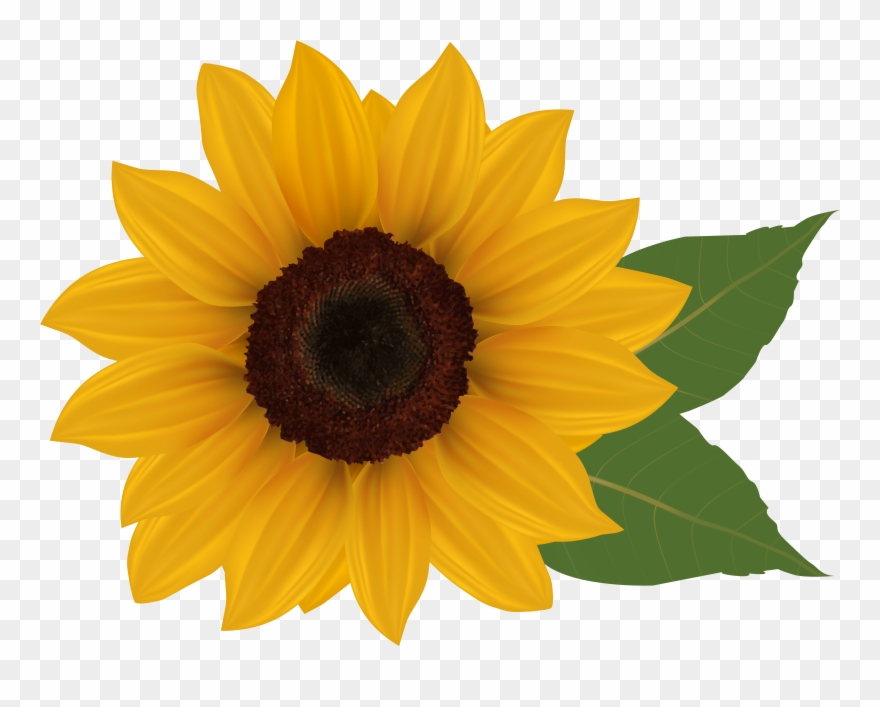 svg library stock Sunflowers clipart transparent background. Clip art sunflower with