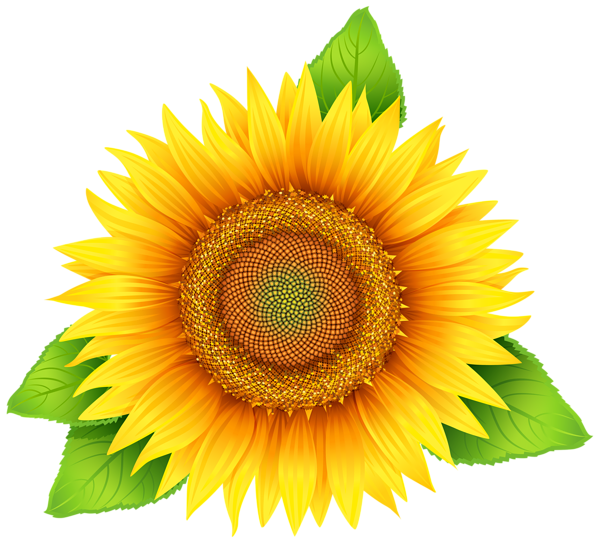 svg Sunflower png image flower. Sunflowers clipart wedding