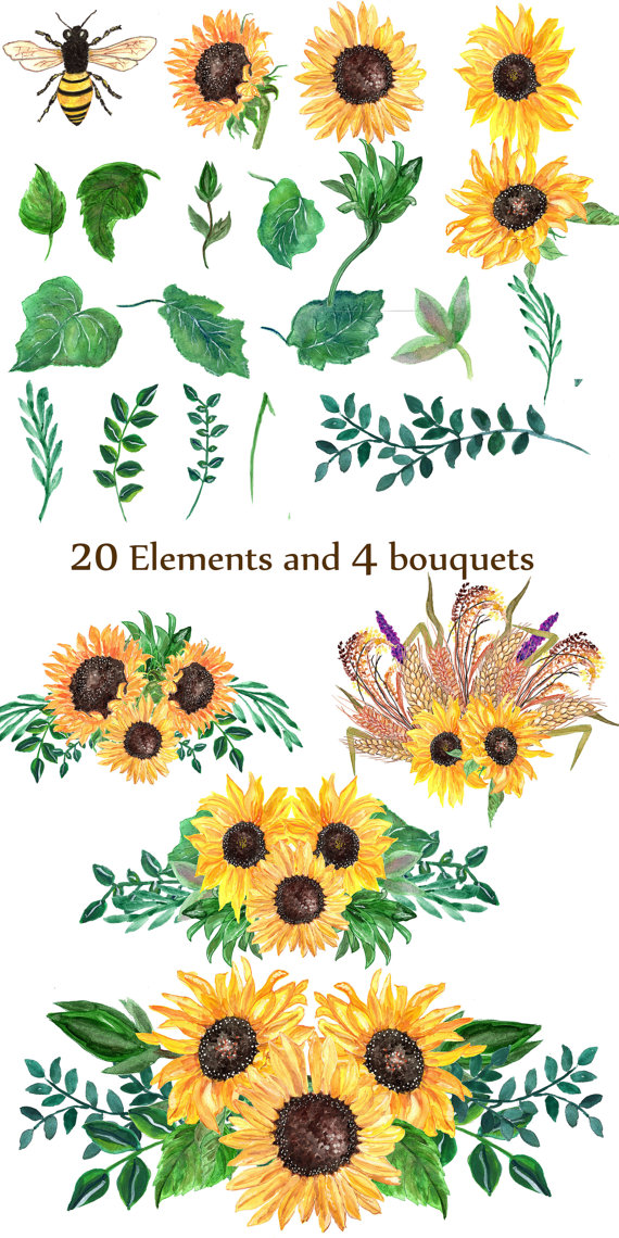 clipart royalty free library Sunflower watercolor clip art. Sunflowers clipart wedding