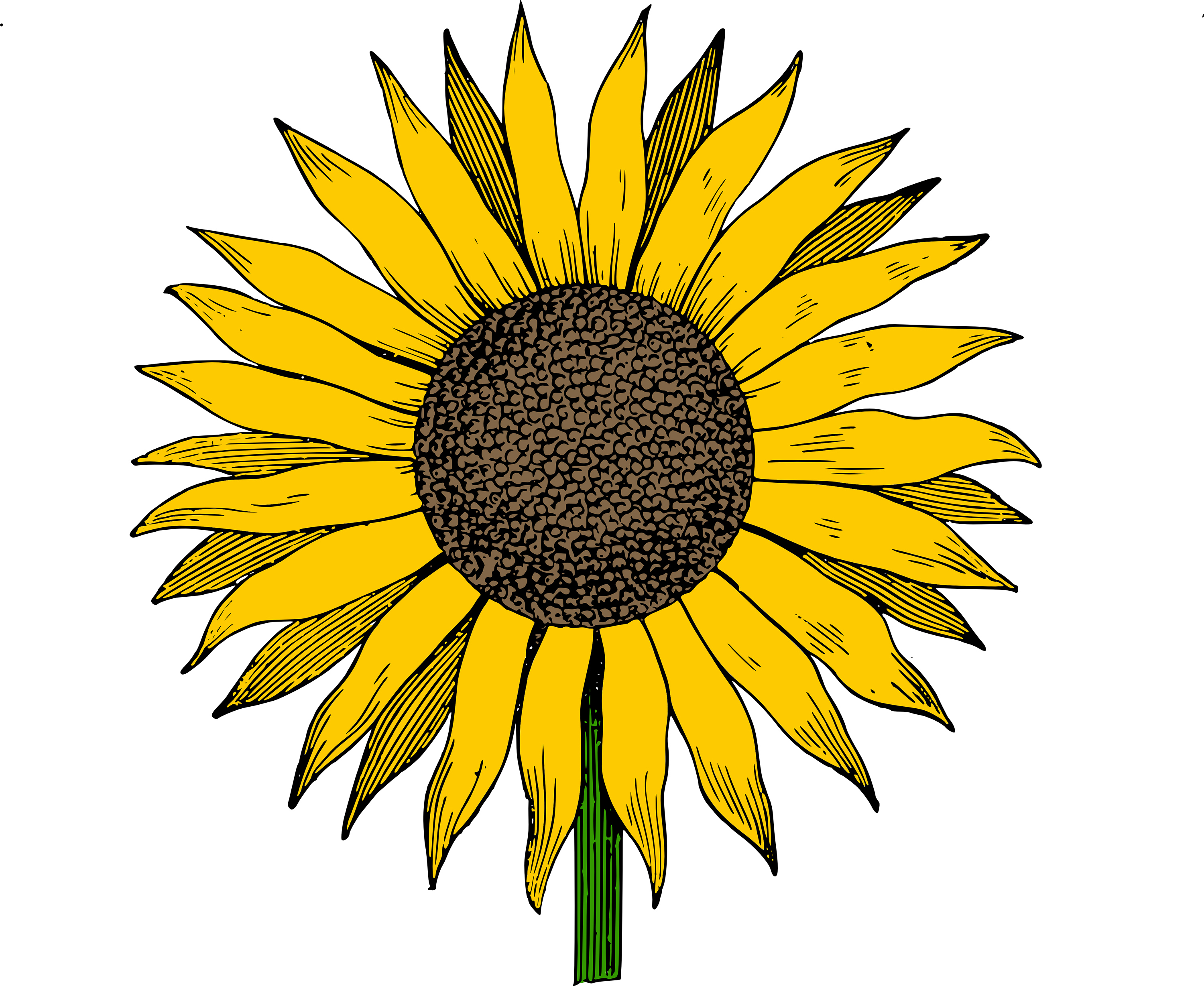 picture black and white library Free sunflowers download clip. Clipart sunflower