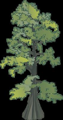 vector free stock Cypress Tree Drawing