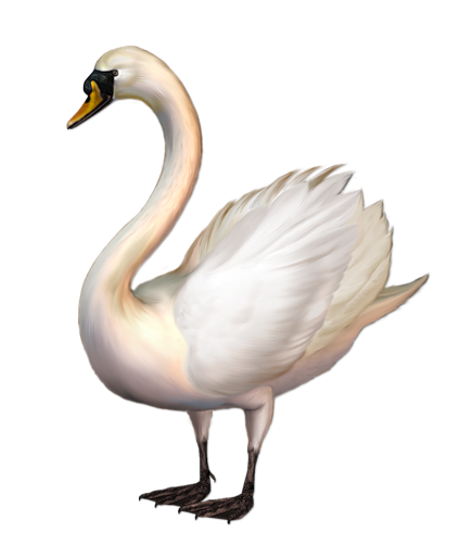 svg black and white Swan clipart. Images transparentpng