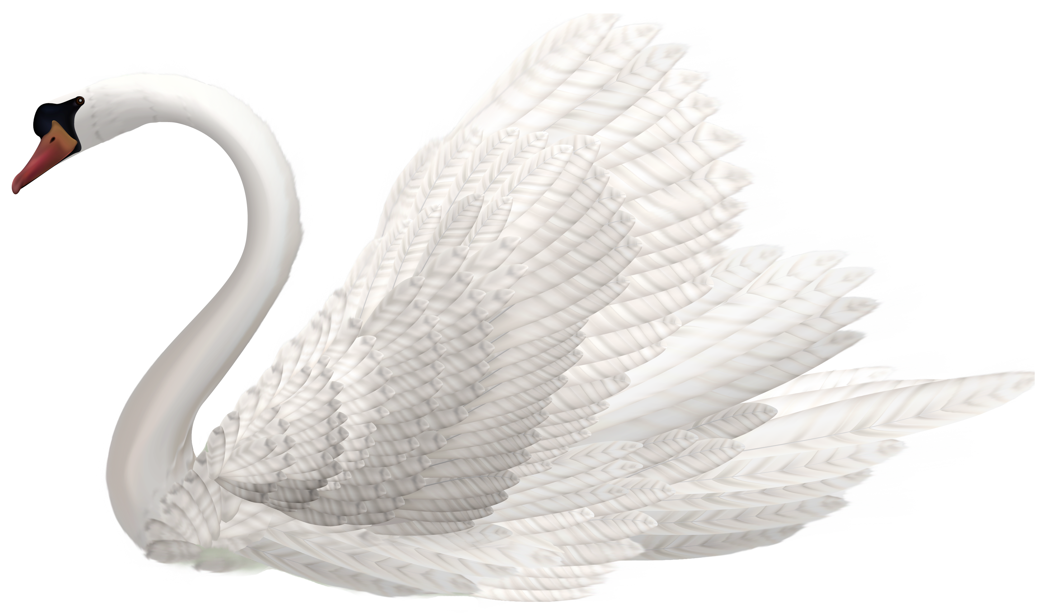 royalty free Swan clipart. White png image best