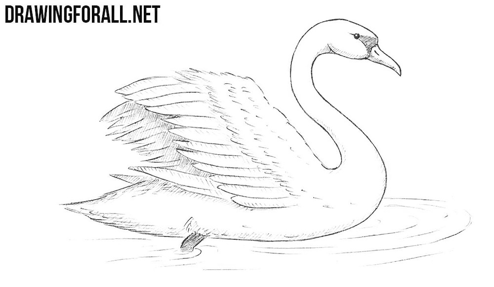 clip art royalty free How to draw a. Swans drawing.
