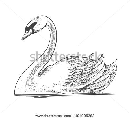 jpg transparent download Swans drawing. Pin by just eggsquisite.