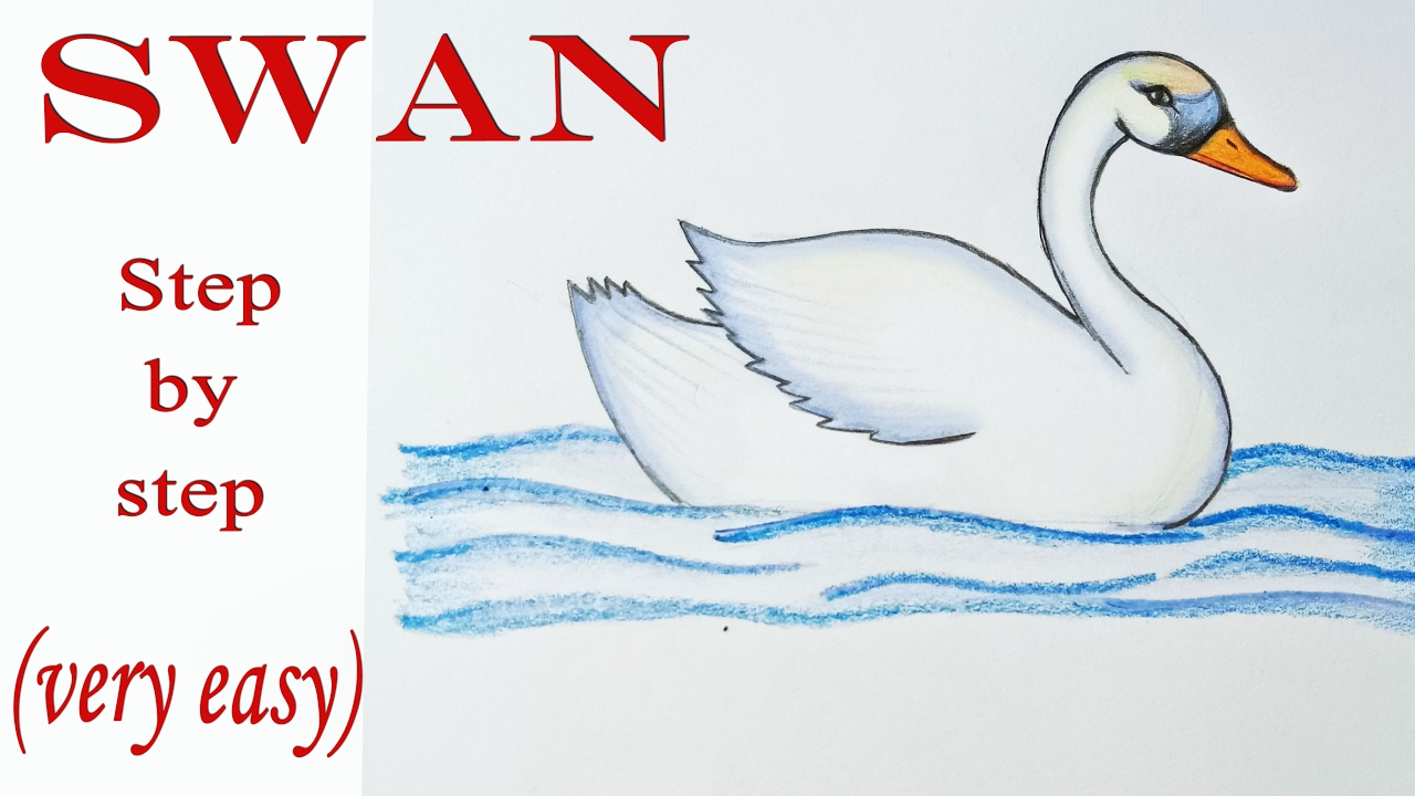 jpg transparent download How to draw a. Swans drawing.
