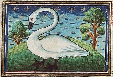 graphic stock Swans drawing medieval. Bestiary swan gallery illuminations