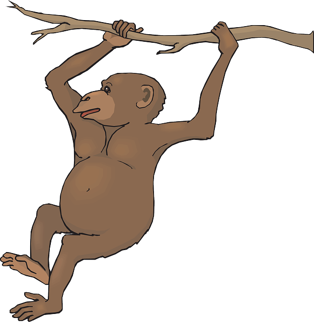vector free Ape clipart realistic. Swinging monkey panda free.