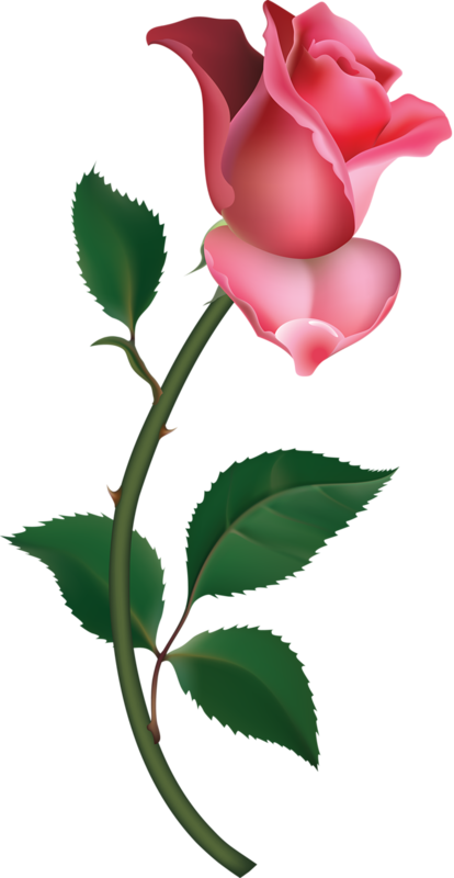 vector transparent library Transparent painting lovely flower. Large pink rose bud