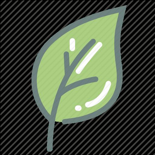free download Matcha Green Tea