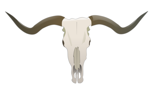 transparent English line art hereford. Texas longhorn clipart