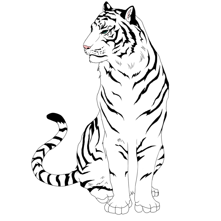 picture free stock Tiger Black And White Drawing at GetDrawings