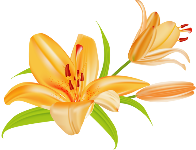 clip royalty free download Tiger Lily Clipart