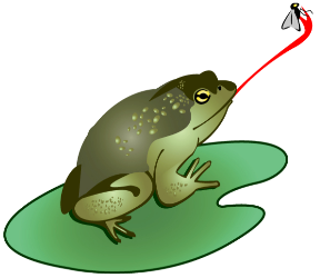 clipart black and white Bullfrog free on dumielauxepices. Tongue clipart frog