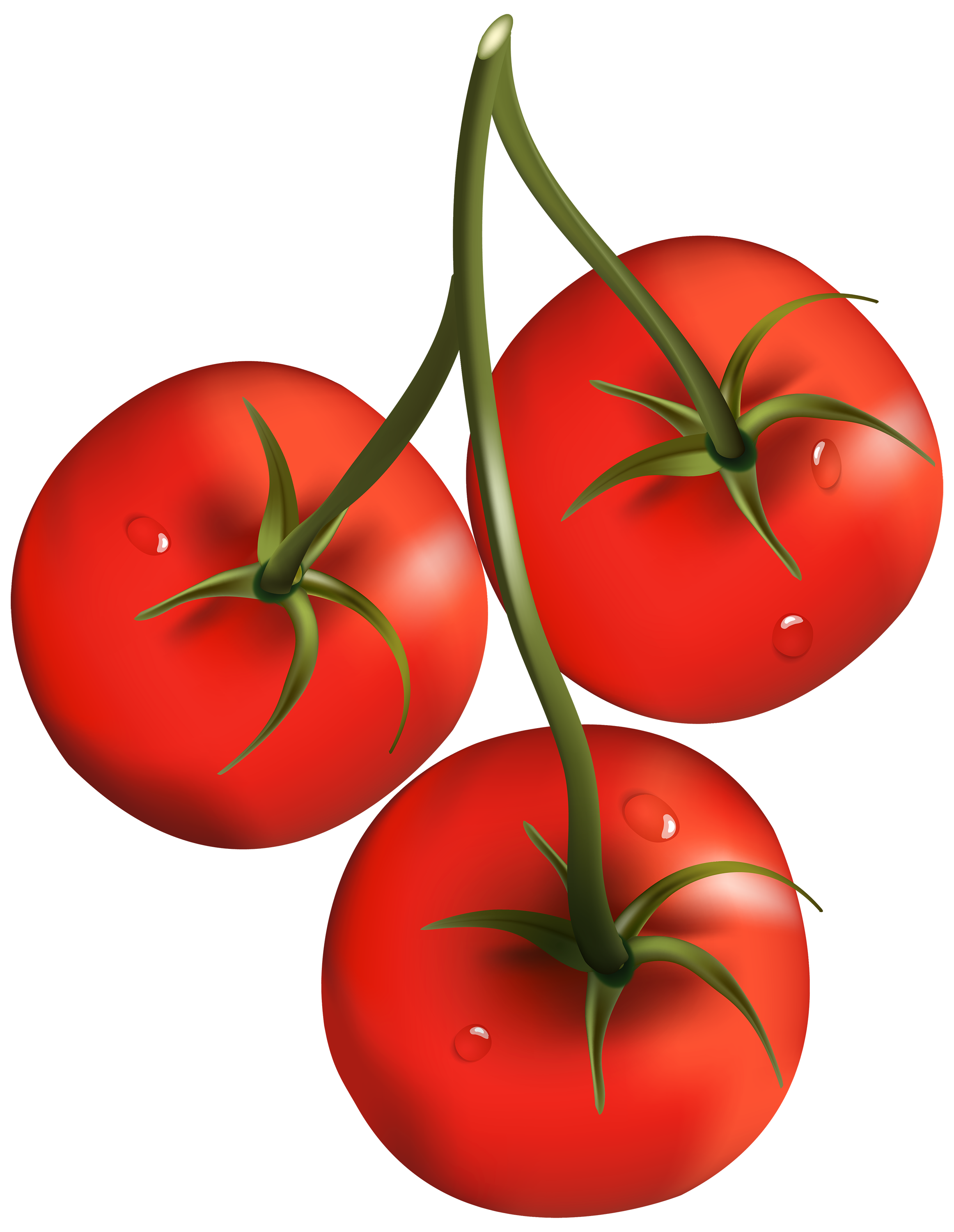 clip art royalty free library Frames illustrations hd images. Tomato clipart.