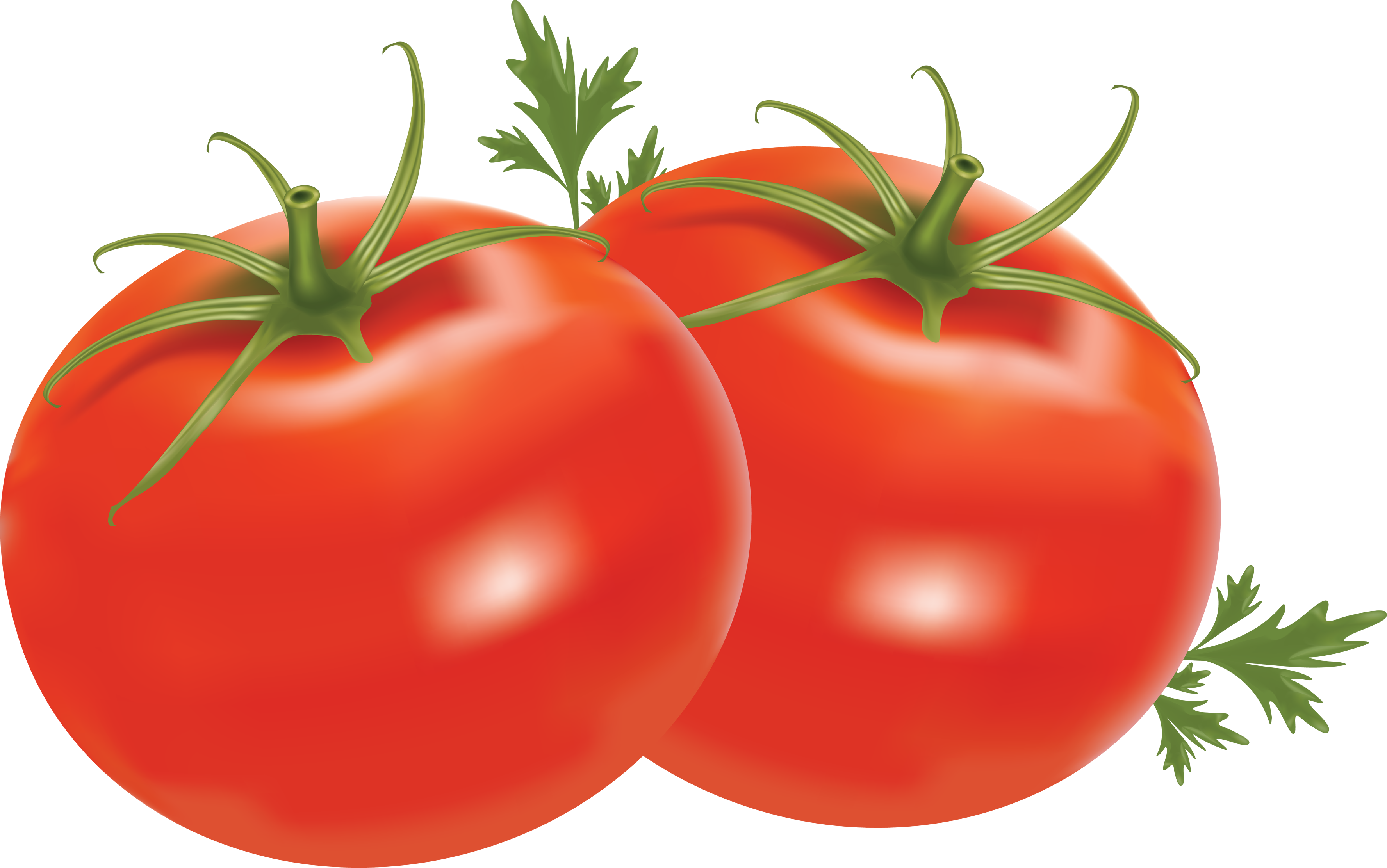 image download Tomato png images free. Tomatoes clipart