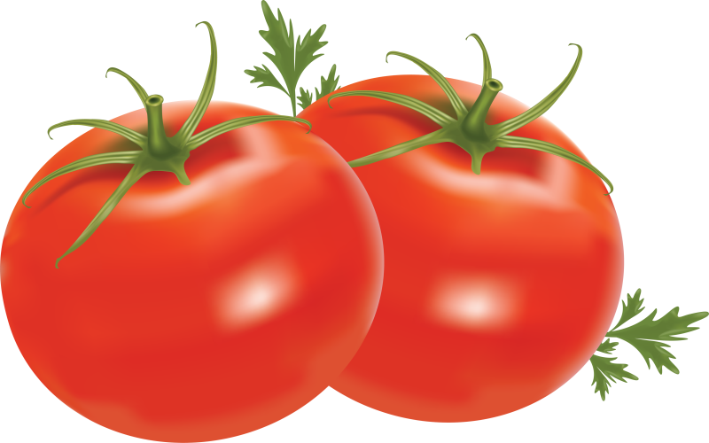 clip download Tomatoes clipart kamatis. Transparent free