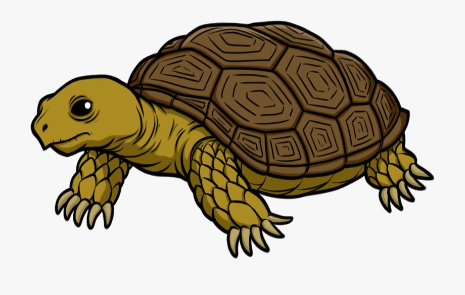 clipart royalty free download Tortoise clipart. Turtle art transparent transprent.