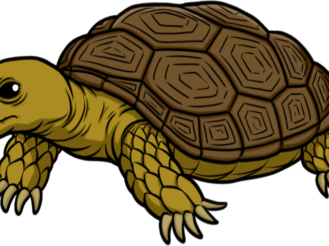 image black and white library Free on dumielauxepices net. Tortoise clipart