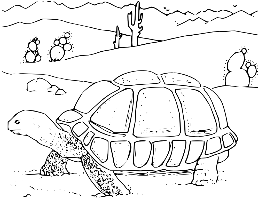 jpg library stock  collection of desert. Tortoise clipart black and white