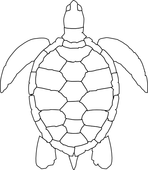 vector free download Tortoise shell drawing at. Turtle black and white clipart