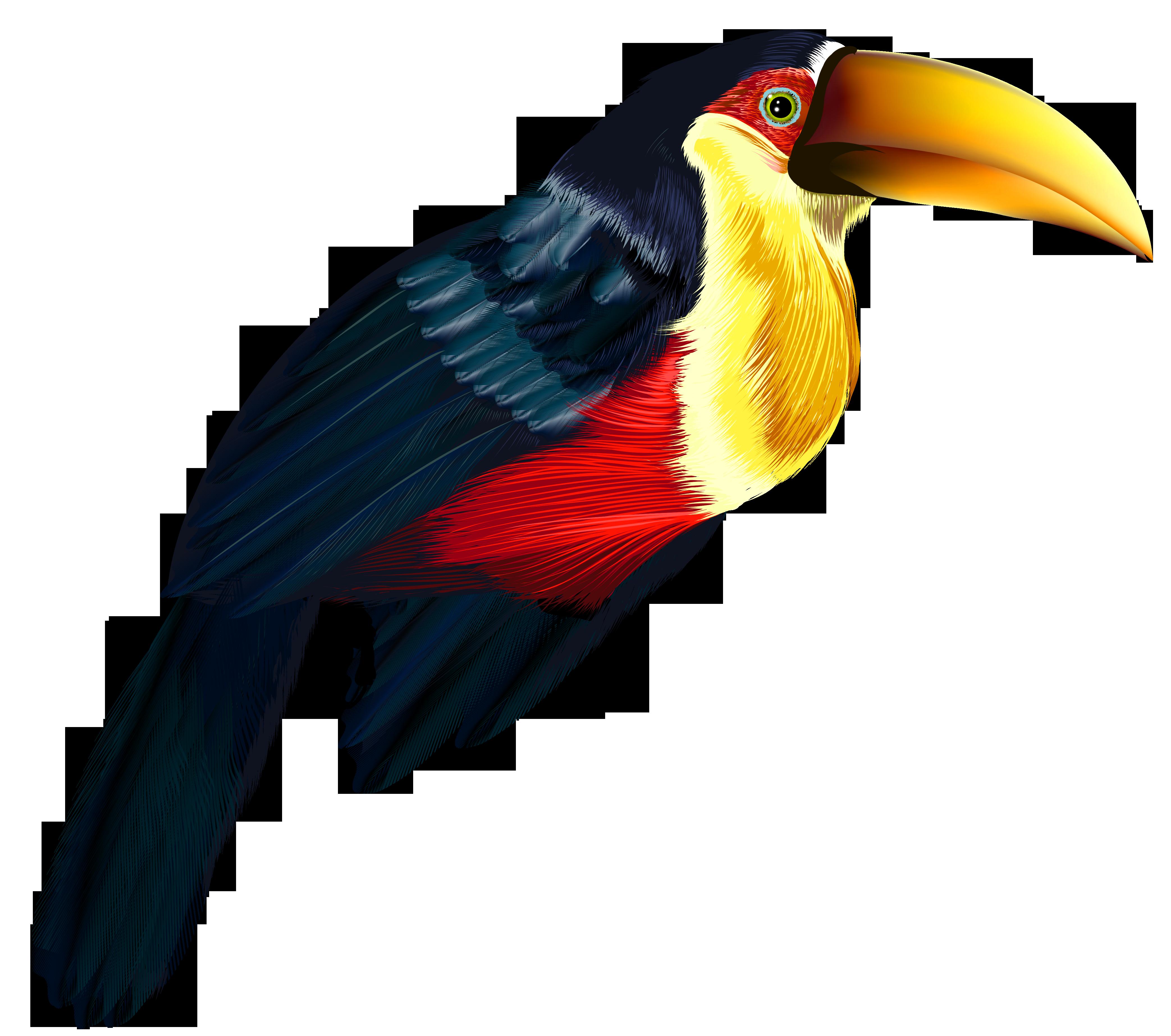 vector Toucan Transparent PNG Clipart