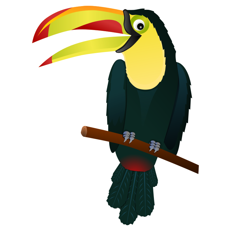 png library library Toucan Clipart macaw