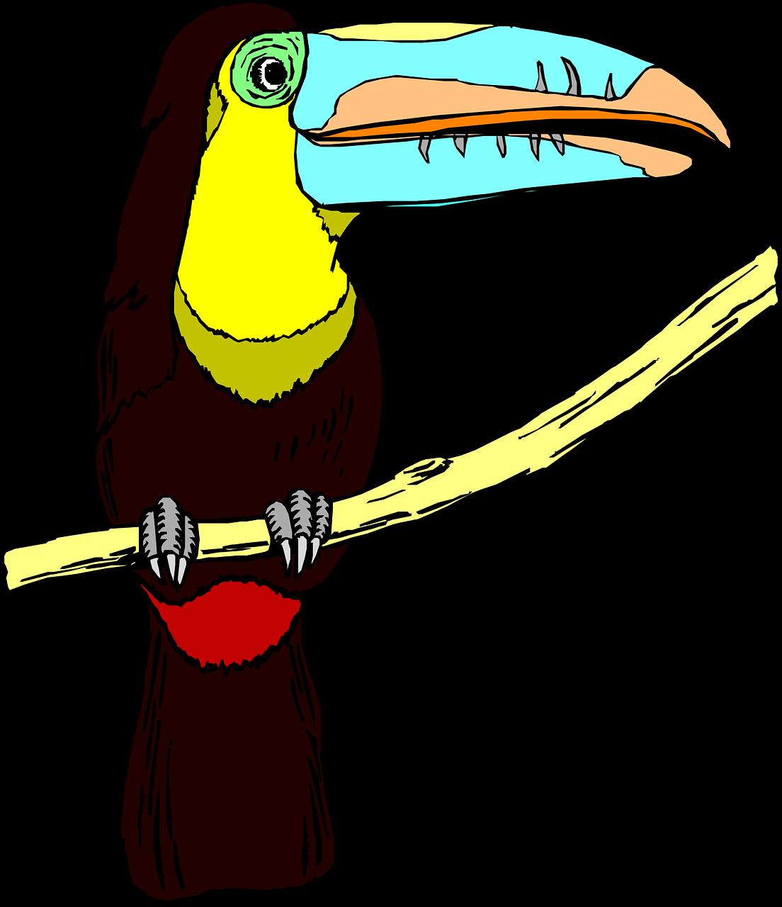 image royalty free library toucan vector tropical bird #104972711